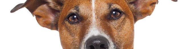 Decode Dog Behavior